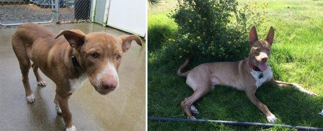 chiens-avant-apres-adoption-17