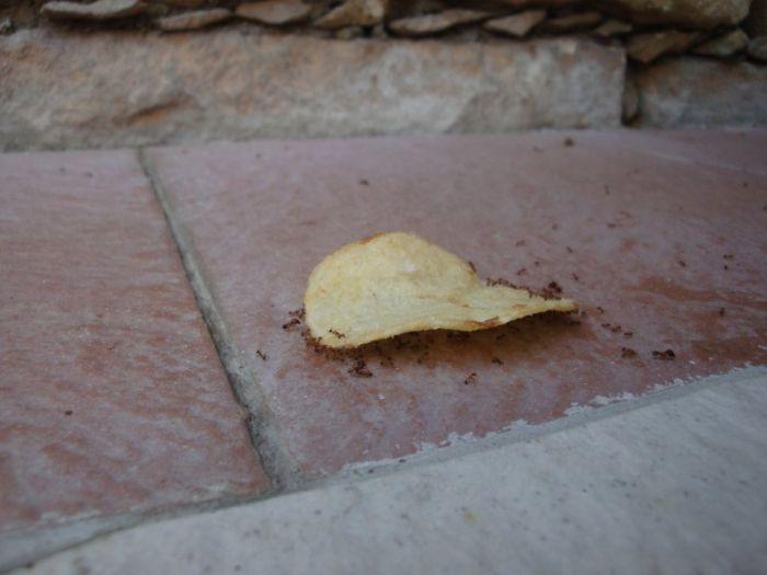 fourmis-chips-travail-equipe-11