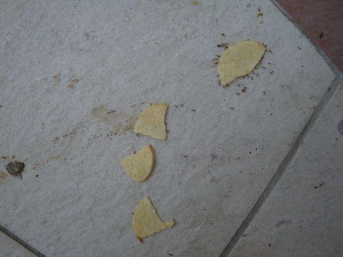 fourmis-chips-travail-equipe-14