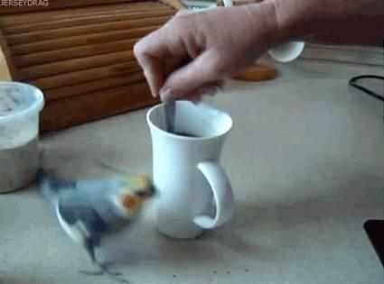 gif-oiseau-tourne-autour-cafe