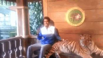 gif-photo-avec-tigre