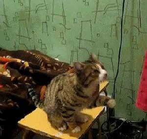 chat-demande-caresse