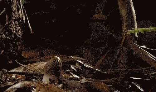 naissance-champignon-robe