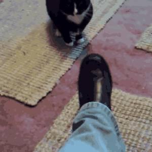 chat-excite-sur-une-chaussure