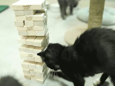 chat-joue-jenga