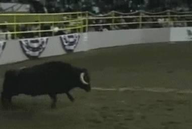 salto-arriere-sur-taureau