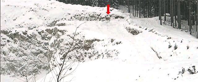 cerf-presque-explose