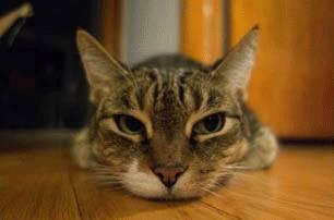 longueur-focale-chat-allonge