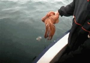 poulpe-prend-couleur-bateau