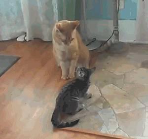 baston-chats