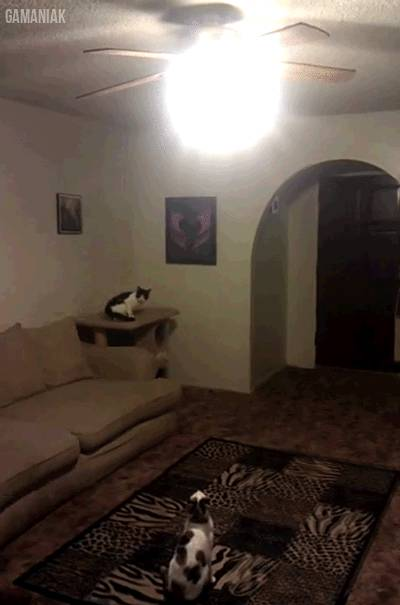 chat-saute-eteindre-lustre