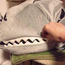 chat-dans-gueule-dun-requin
