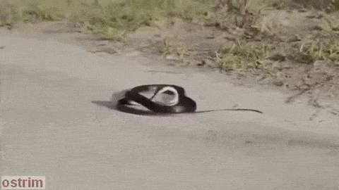 serpent-abeille