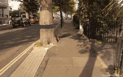 tronc-arbre-levite