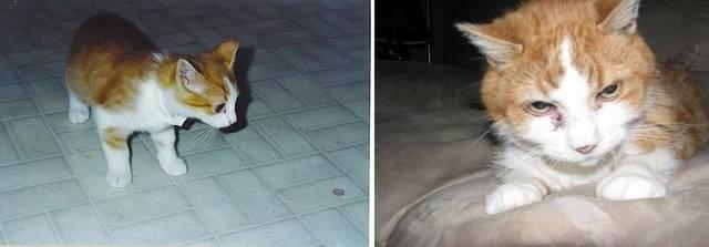 premieres-dernieres-photos-chiens-chats-13