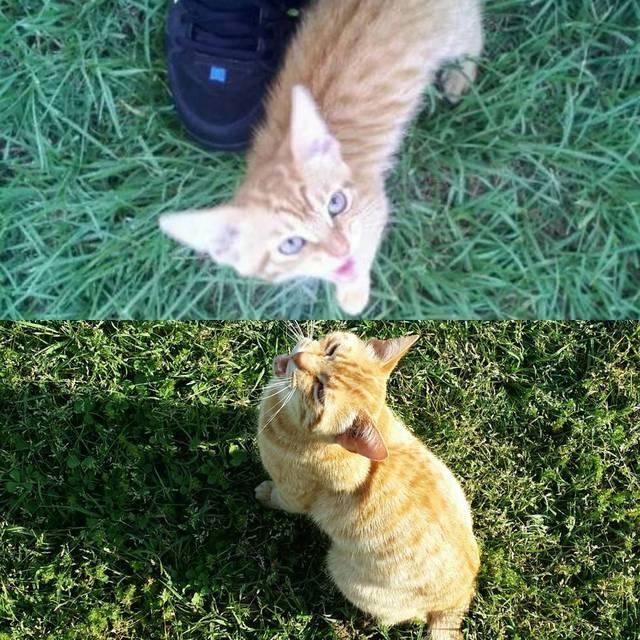 premieres-dernieres-photos-chiens-chats-17