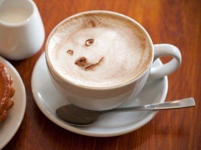 chien-blanc-cappucino