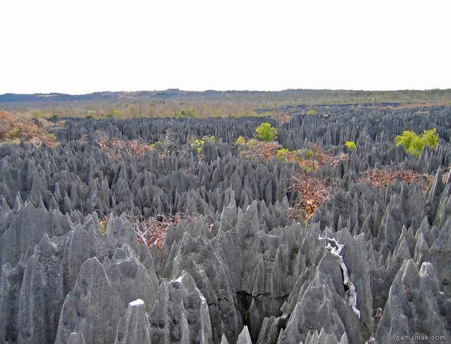 arbres-recouverts-toiles-araignees