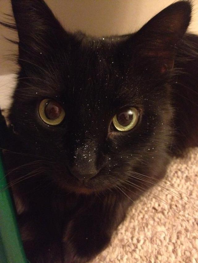 chat-noir-avec-des-paillettes