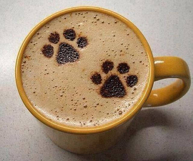 cafe-pattes-chat