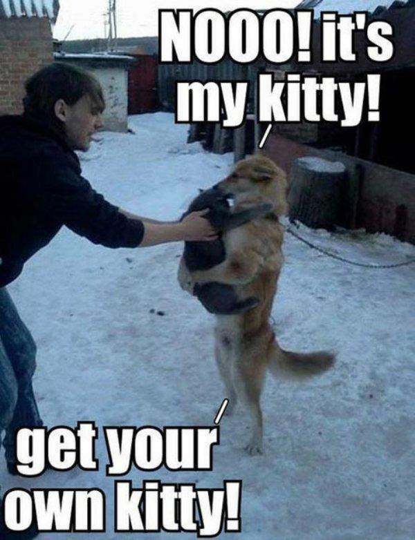 non-cest-mon-chat-prends-toi-autre