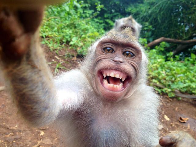 singe-vole-appareil-photo-fait-selfie-avec