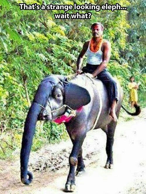 ton-elephant-air-bizarre