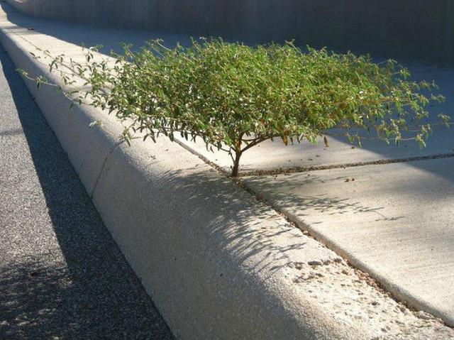 arbre-qui-semble-geant-sur-trottoir