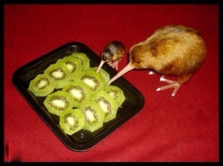 kiwi-cannibale