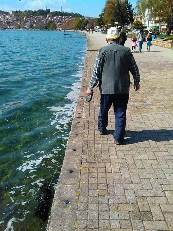 faire-nager-son-chien-pendant-une-promenade
