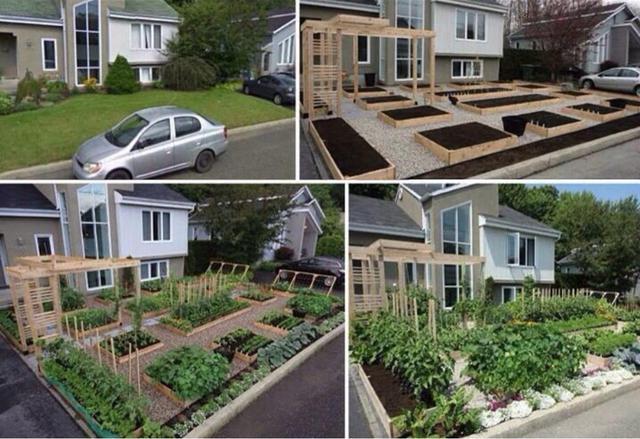 faites-pousser-des-plantes-pas-herbe