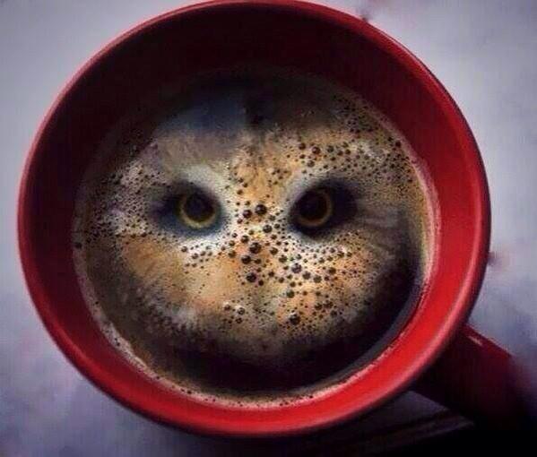 hibou-dans-cafe