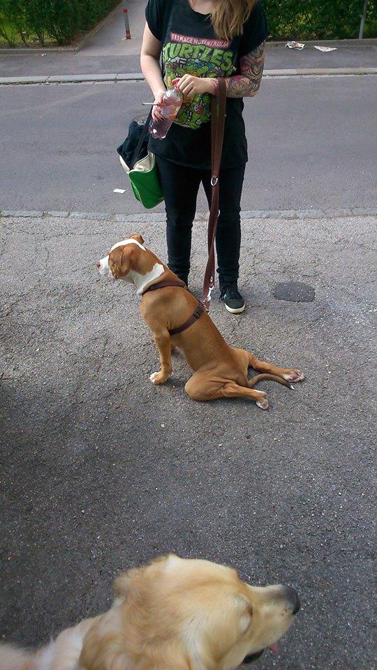 chien-sait-pas-asseoir