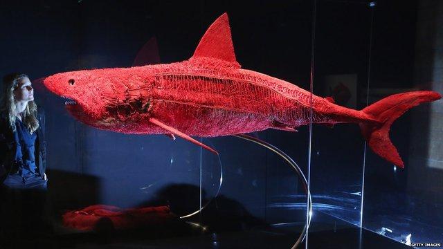 vaisseaux-sanguins-requin