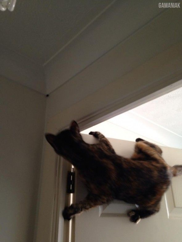 chat-compte-tuer-mouche