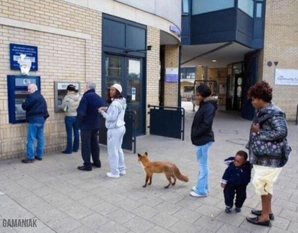 renard-queue-distributeur-billets