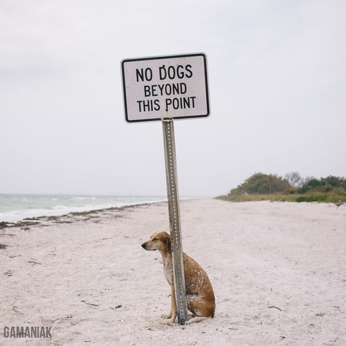 pas-chiens-apres-panneau