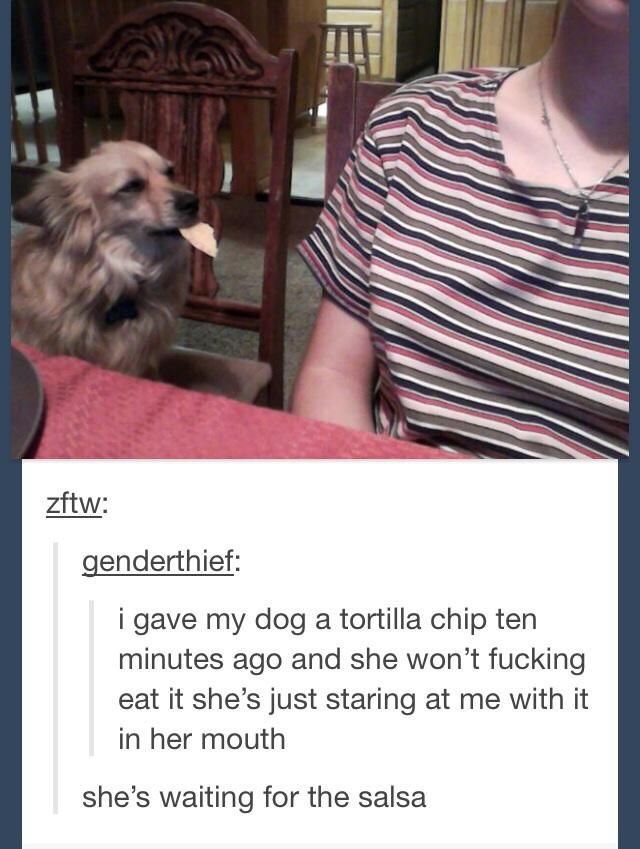 ton-chien-attend-sauce