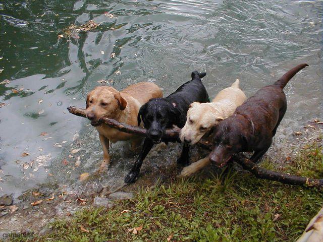 4-chiens-1-baton