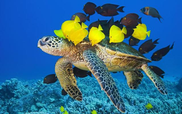 tortue-taxi