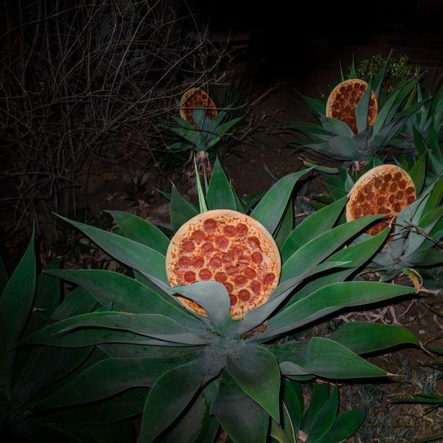 plante-pizza