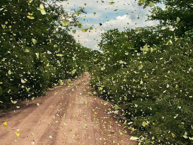route-bloquee-par-des-papillons