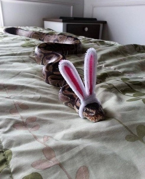 peux-ouvrir-cage-hamster-cest---suis--lapin