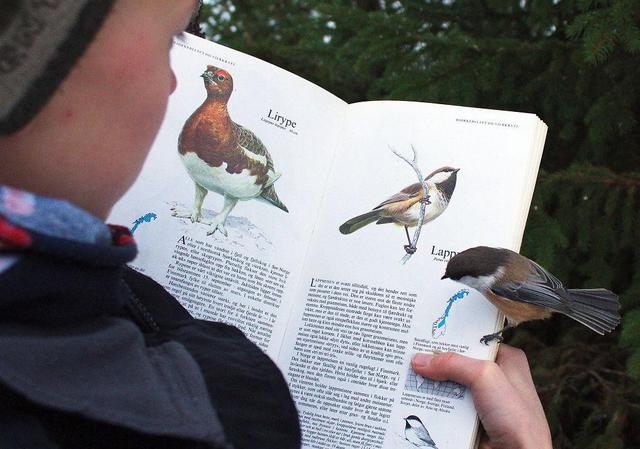 oiseau-regarde-dans-livre