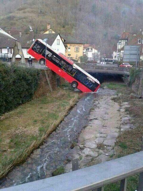 bus-sauvage-boit-riviere