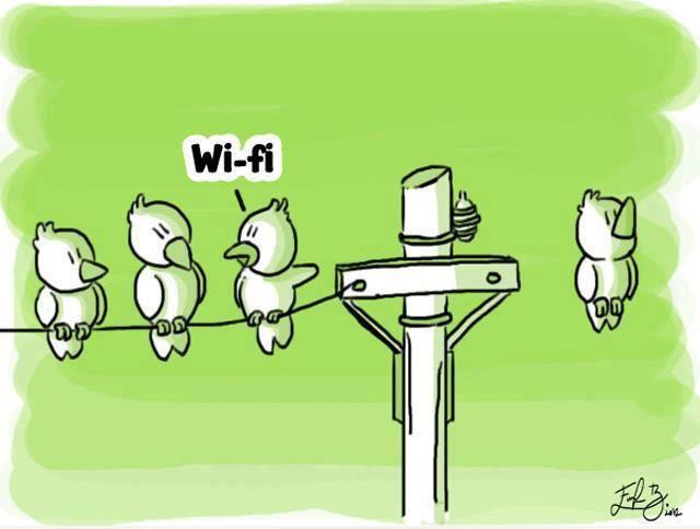oiseau-wifi