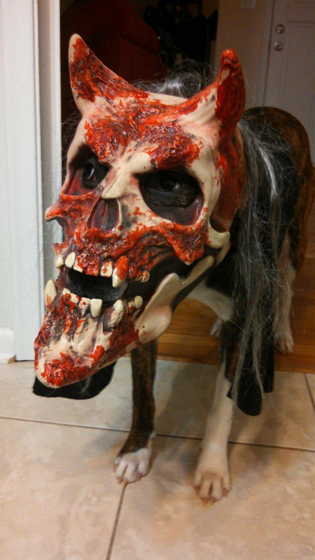 chien-masque-flippant