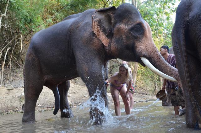 6eme-membre-elephant