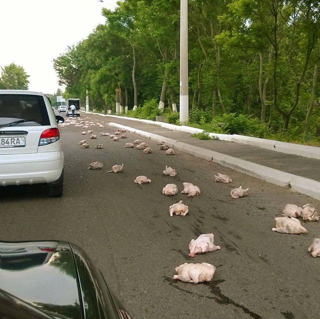 attention-poulets-sur-route