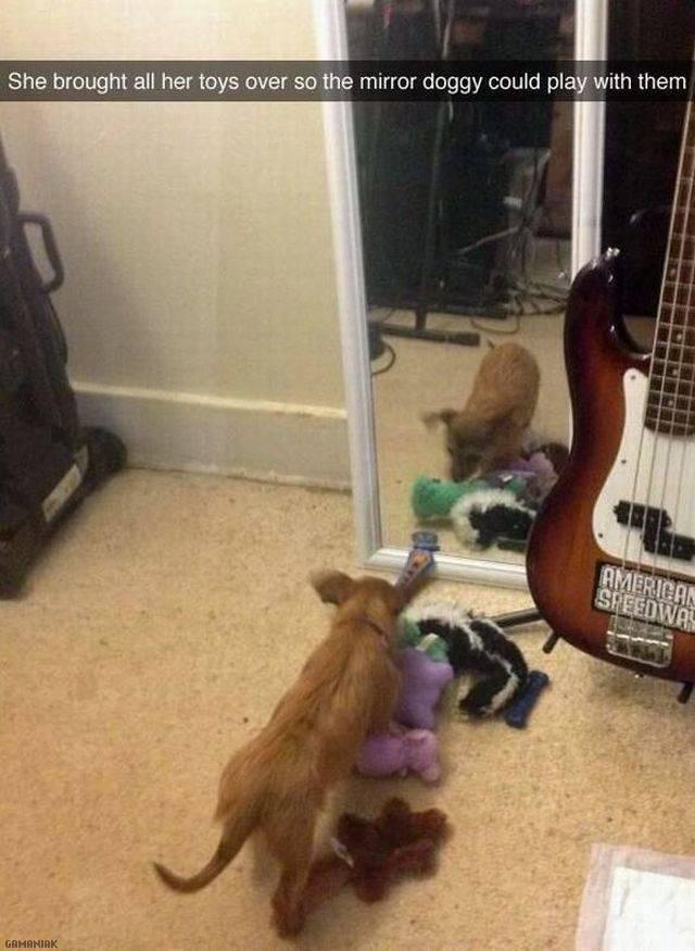 chien-ramene-jouets-ami-miroir